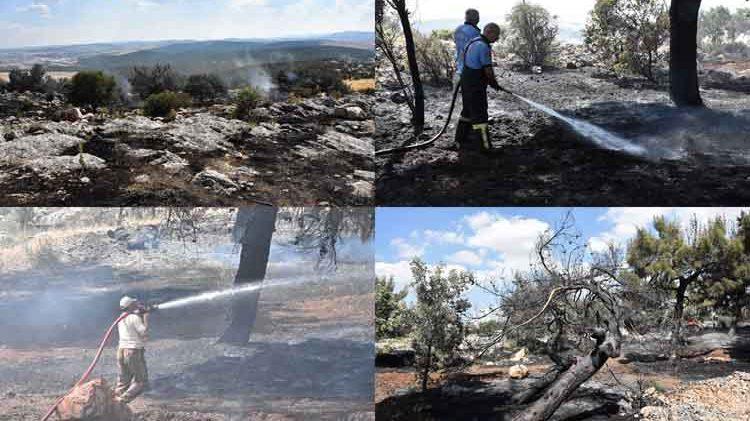 Orman Yangını: 20 dönümlük alan kül oldu!