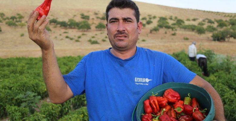 Biber Bu Yıl Pahalı Yiyecekler Arasında