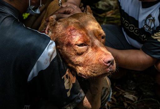Köpek Dövüştürenlere İlk Kez Hapis!