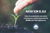 Şahinbey'den Hatay'a 25 bin fidan