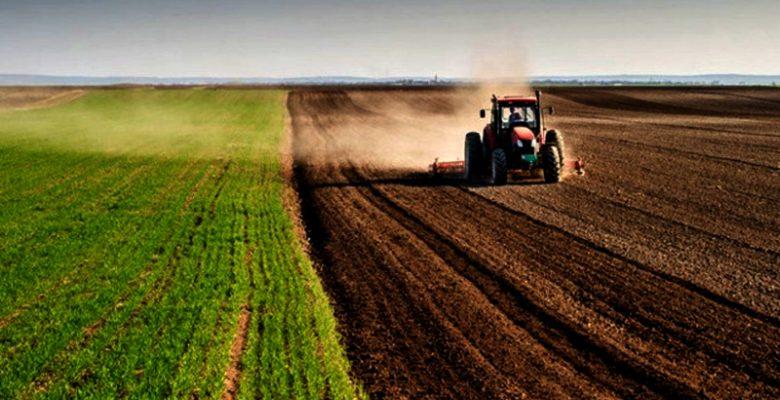 Pirinç ve tahılda tarla fiyatlarında sert artış