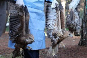 Tedavisi Tamamlanan Kuşlar Doğaya Bırakıldı
