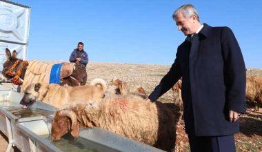 Başkan Tahmazoğlu'ndan hayvancılığa tam destek