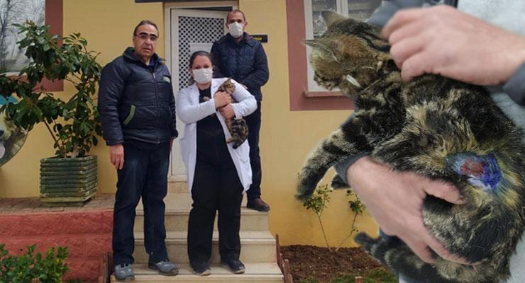 İşkence edilen kediye hayvanat bahçesi sahip çıktı