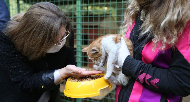 Sokak hayvanları için Mustafa Kemal Üniversitesi ile önemli protokol
