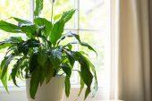 Alerjiye İyi Gelen 5 Bitki