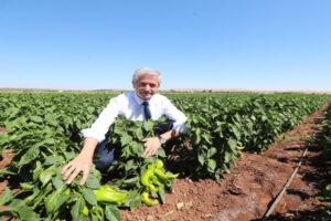 Tahmazoğlu çiftçilerle hasatta