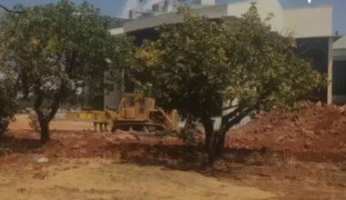Gaziantep Üniversitesi'nde ağaç kıyımı!
